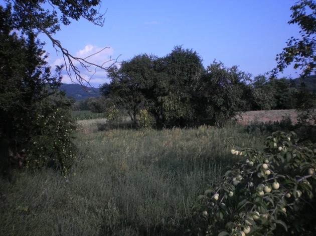 Призор јунски: прозор у мистику Звижда. Фотодокументација Звижда, јун 2013.