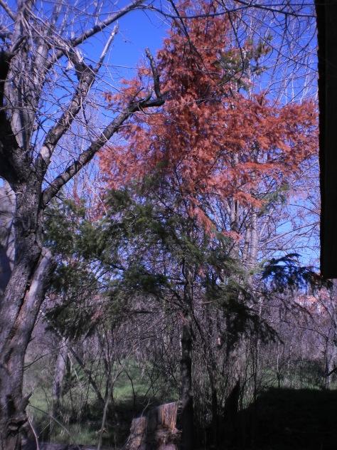 73. Буђење пролећа у Ивању и околини. Србијом уздуж и попреко. Црвен бор иза стричеве клуће.Мирине инсталације.