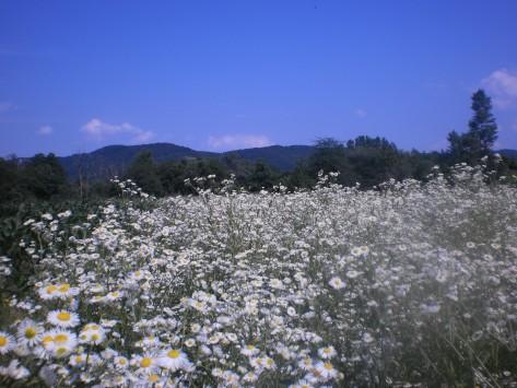 УВЕЋАЊЕ, поетика ових фотографија и прилога (28. јун 2014) цветови забачених места