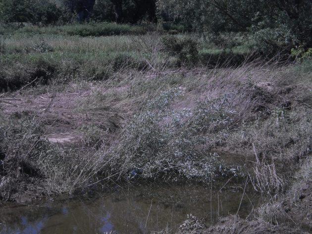Из албума:Лагуне, воде, године (Иван Лукић, 2014, пролеће)